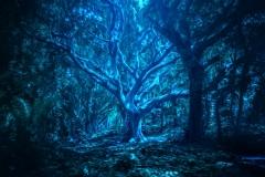 Halloween skov