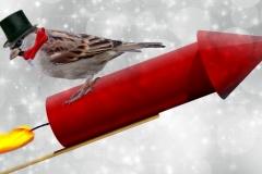 Nytår fugl