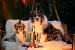 img_new-years-day-1090770