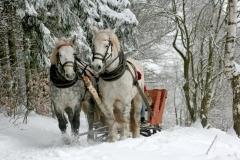 Hestekane i sne