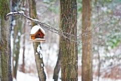 Fuglehus i skov med sne